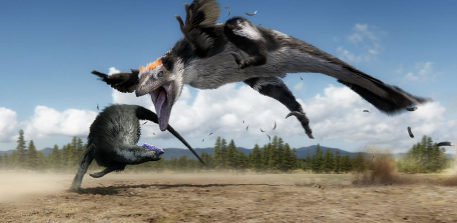 raptor_chases_thesc-940x460